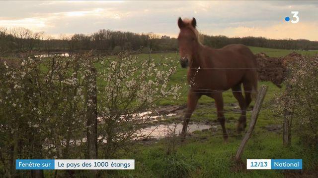 Indre : fenêtre sur le pays des 1 000 étangs