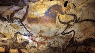Les peintures originales de la grotte de Lascaux (Dordogne), le 16 septembre 2010. (PHILIPPE WOJAZER / POOL)