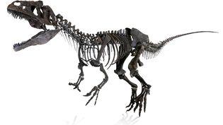 Le squelette de dinosaure inconnu, vendu le 4 juin 2018 à Paris. (AGUTTES)