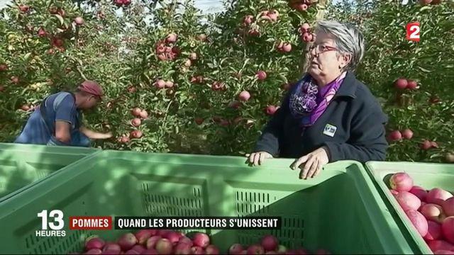 Économie : quand les producteurs de pommes s'unissent