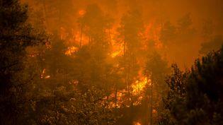 """Les forêts brûlent à Gouves (Grèce), conséquence de la""""pire canicule"""" dans le pays en plus de trente ans, le 8 août 2021. (ANGELOS TZORTZINIS / AFP)"""