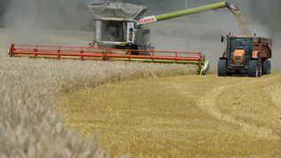 Les céréaliers doivent saisir les maigres fenêtres d'éclaircies entre les intempéries pour récolter le blé. Les moissons continuent alors qu'elles auraient dû s'achever fin juillet. (JEAN-FRANCOIS MONIER / AFP)