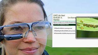 lunettes pucerons (FRANCE 2)