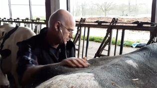Laurent Perrin ausculte une vache dans une exploitation. (FRANCEINFO / RADIOFRANCE)
