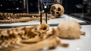 Deux squelettes de Vikings de plus de 1000 ans s'avèrent de lamême famille, après leur cartographie ADN (Juin 2021). (IDA MARIE ODGAARD / RITZAU SCANPIX)