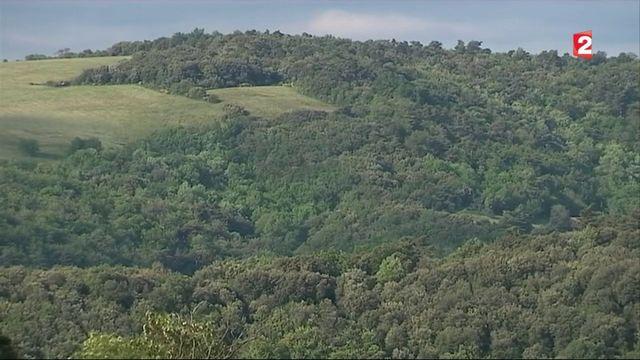Forêt : un trésor en danger