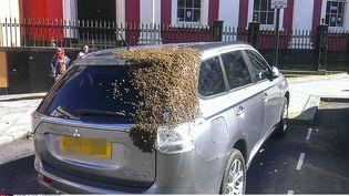 Un essaim d'abeilles s'est établi surune voiture, le 23 mai 2016, à Haverfordwest (pays de Galles, Royaume-Uni). (TOM MOSES / MERCURY PRESS / SIPA)