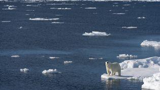 Ours polaire sur la banquise en Norvége. (WOLFGANG KAEHLER / LIGHTROCKET)
