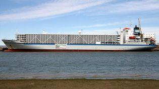 "Le cargo ""Al-Shuwaikh"" transporte 60000 têtes de bétail. (Les blair MarineTraffic.com)"