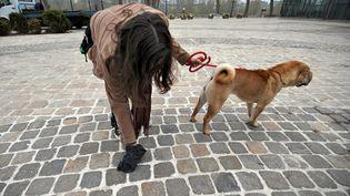 Les déjections des chiens dans les rues, autre fléau avec les mégots et les chewing-gums. Image d'illustration (  MAXPPP)