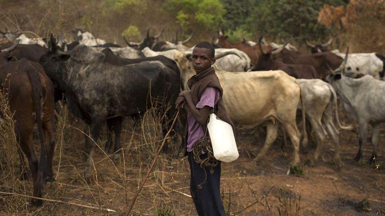 Eleveur peul en Centrafrique. Ces éleveurs sont en rivalité avec les cultivateurs pour les pâturages et l'eau. (Siegfried Modola/reuters)