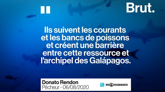 Au large des îles Galápagos, cette flotte chinoise de 340 navires de pêche épuise les ressources de l'archipel depuis des années. Les habitants dénoncent une véritable catastrophe pour la biodiversité.