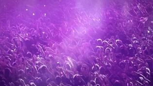 Image du clip officiel de Solidays 2014  (Capture d'écran du clip)