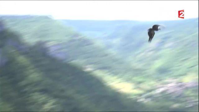 Lozère : les Gorges de la Jonte, un paradis niché dans les hauteurs