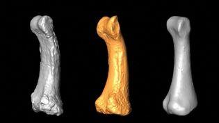 Des fragments osseux de l'Homo luzonensis matérialisés en 3D. (FRANCE 3)