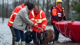 Des pompiers sauvent des animaux en péril en raison des intempéries, vendredi 13 décembre 2019 à Peyrehorade (Landes). (GAIZKA IROZ / AFP)
