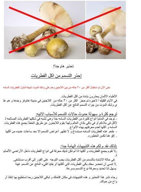 L'hôpital d'Hanovre a édité des affiches en plusieurs langues pour alerter le public des dangers de consommer l'amanite phalloïde. (MHM / DR)
