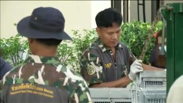 Trafic d'animaux : quatorze orangs-outans renvoyés en Indonésie