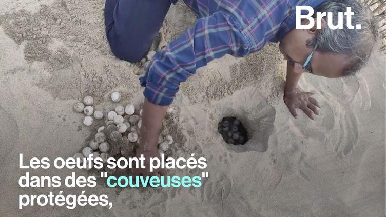 VIDEO. En Inde, des pêcheurs viennent en aide aux tortues de mer menacées (BRUT)