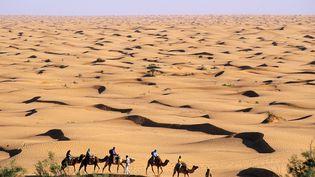Méharée dans l'oasis de Ksar Gilane, grand erg oriental, Sud tunisien, le 13 juillet 2006. (RIEGER BERTRAND / HEMIS.FR)