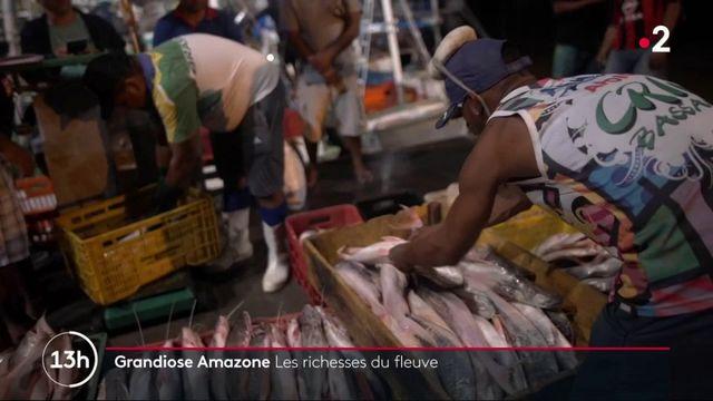 Feuilleton : grandiose Amazone (4/5)