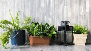 Prenez soin de vos plantes d'intérieur (Aliyev Alexei Sergeevich / GETTY IMAGES)