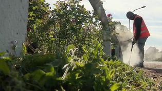 À Poitiers (Vienne), la ville se passe du glyphosate pour entretenir ses espaces verts depuis neuf ans. (FRANCE 2)
