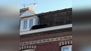 Une panthère noire sur les toits d'Armentières, dans le Nord, finalement capturée par les pompiers. (France 2)