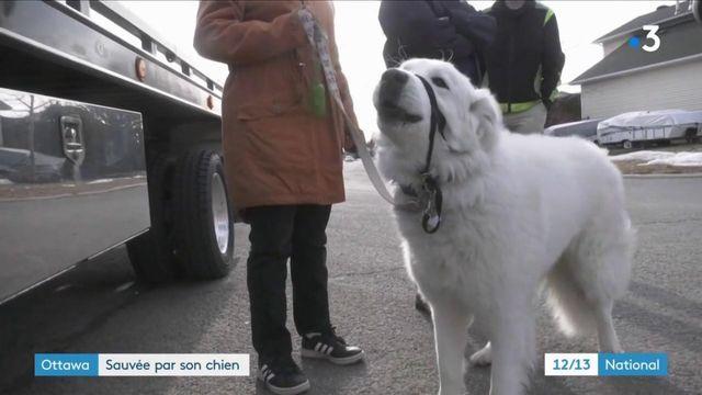 Canada : la belle histoire de Clover, la chienne qui a sauvé sa maîtresse d'un malaise