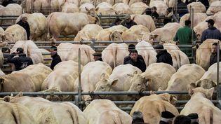 Le Festival du bœuf charolais àCharolles (Saône-et-Loire) le 3 décembre 2016. (JEFF PACHOUD / AFP)