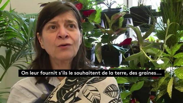 Paris : des potagers au cœur de la capitale