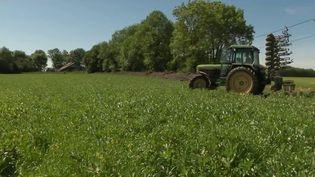 Agriculture : la nouvelle PAC, un coup dur pour les exploitants bio (France 2)