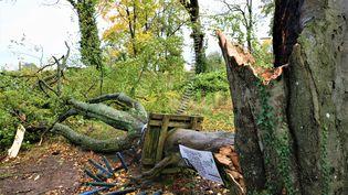 Un arbre arraché par la tempête Aurore, à Longwy (Meurthe-et-Moselle), le 21 octobre 2021. (MAXPPP)