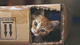 Un chaton joue dans une boîte en carton, le 1er octobre 2013. (CHRIS WINSOR / MOMENT RF / GETTY IMAGES)