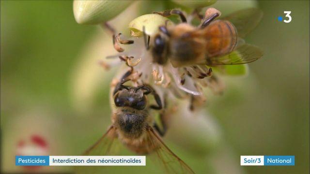Interdiction des néonicotinoïdes : les apiculteurs soulagés, mais toujours vigilants