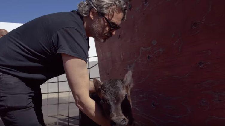 Joaquin Phoenix sauve un veau et sa mère de l'abattoir, le 10 février 2020, en Californie (Etats-Unis). (capture d'écran vidéo de l'ONG The Farm Sanctuary) (THE FARM SANCTUARY)