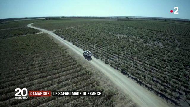 Camargue : au coeur d'un safari made in France
