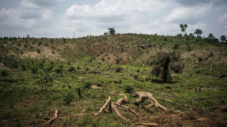 Des arbres cassés en raison de l'intense déforestation menée dans parcelle de forêt du comté de Lofa, dans le nord du Liberia,le 28 avril 2016. (MARCO LONGARI / AFP)