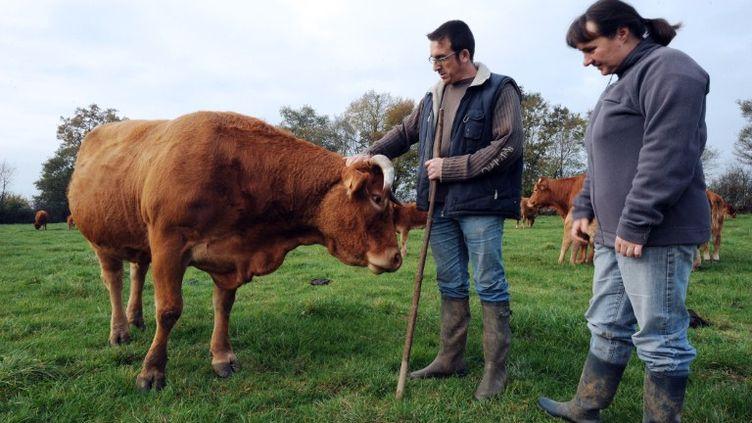 Jean-Pierre et Laure Reigner, éleveurs à Bouère (Mayenne), dont le troupeau a été contaminé aux PCB, le 16 novembre 2011. (JEAN-FRANCOIS MONIER / AFP)