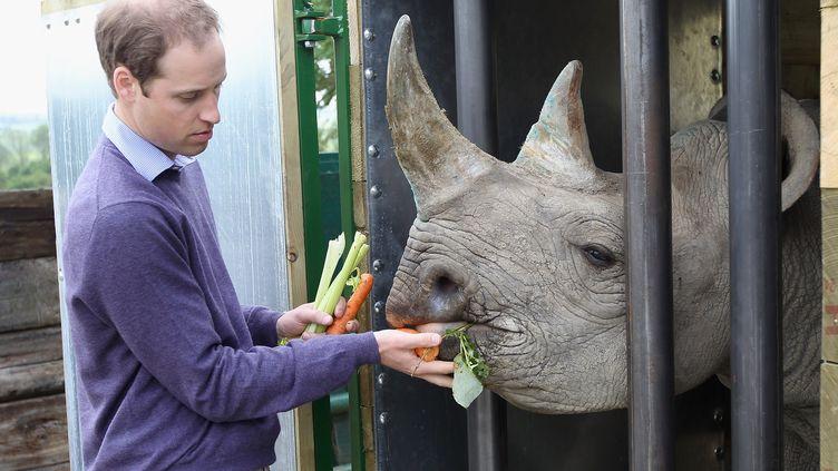 Le prince William nourrit un rhinocéros dans un parc animalier dans le comté du Kent (Royaume-Uni), le 6 juin 2012. (CHRIS JACKSON / AFP)