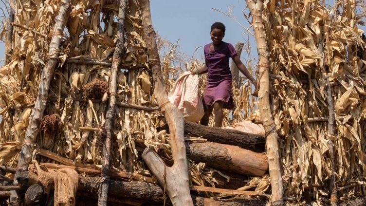 Une habitante du Zimbabwe inspecte les réserves de nourriture, le2 septembre 2015, à Bindura. (JESEKAI NJIKIZANA / AFP)