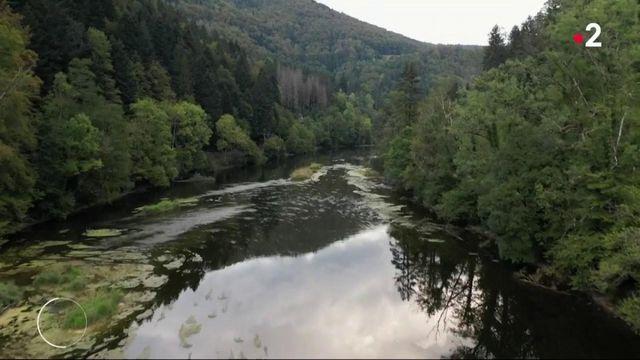Franche-Comté : la production de Comté accusée de polluer les rivières