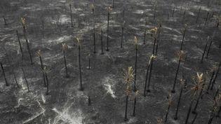 Une vue aérienne des dommages causés par les incendies dans la région du Pantanal, dans le sud-est de la Bolivie, le 26 août 2019. (PABLO COZZAGLIO / AFP)