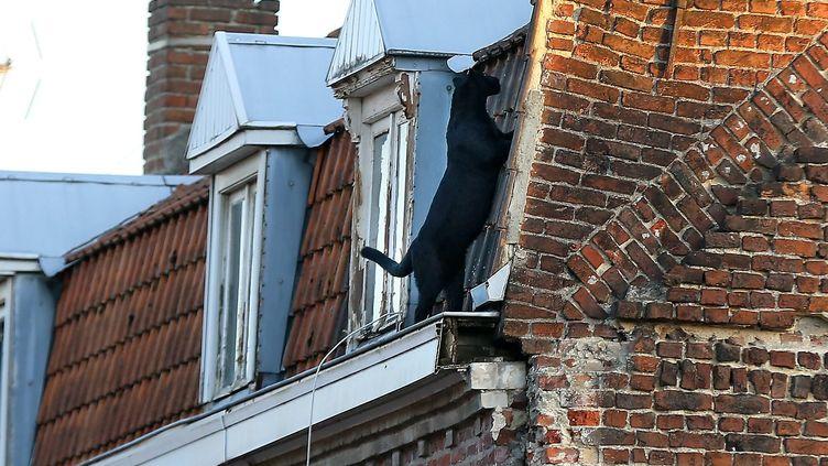 La panthère noire a été aperçue vers 18h30 se baladant sur les toits de la ville (MAXPPP)