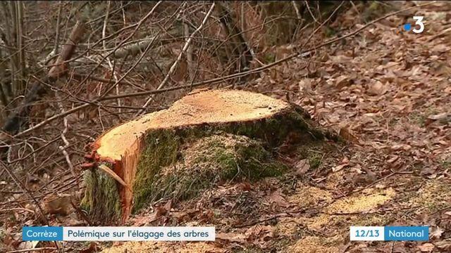 Corrèze : polémique autour d'une campagne d'élagage