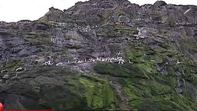 Ecosse : Saint-Kilda, le plus grand sanctuaire d'oiseaux de l'Atlantique Nord