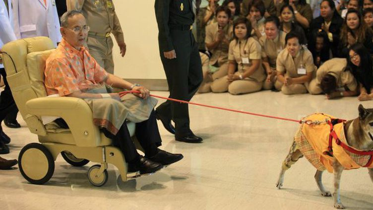 Le roi Bhumibol Adulyadej accompagné de son chien Thongdaeng, le 18 octobre 2012. (AFP/Bangkok Post photo/Patipat Janthong)