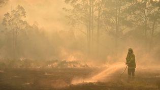 Un pompier tente d'éteindre le feu à Hillville, à 350 kilomètres au nord de Sydney, le 12 novembre 2019. (PETER PARKS / AFP)
