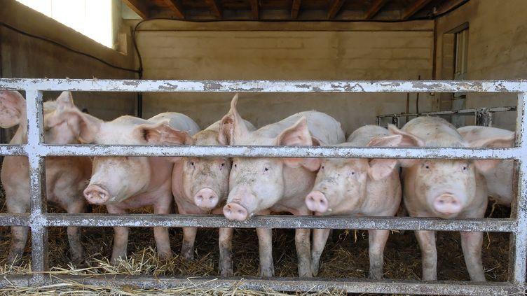 Certains voleurs n'hésitent pas à dérober des bêtes aux agriculteurs. (ERIC TEISSEDRE / PHOTONONSTOP / AFP)