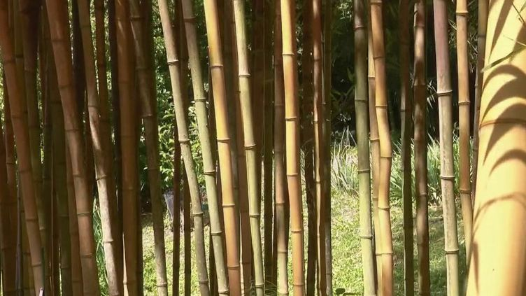 Un petit coin de zen au beau milieu des Cévennes. La bambouseraie d'Anduze (Gard) réserve bien des surprises. (FRANCE 2)
